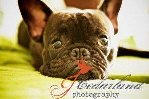 photo tip :: capture your real subject