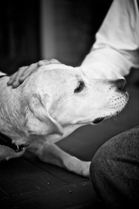 A man and his dog :: short photo essay