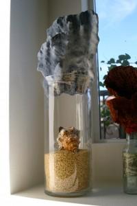 big blue coral, hurricane vase, and brown rice