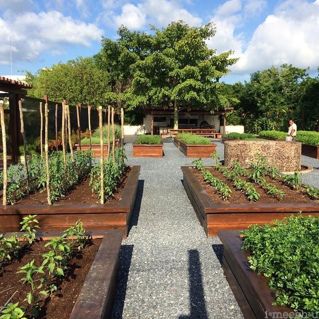 mayakoba-organic-garden